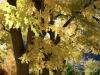 trees-3-_1_