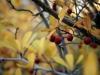trees_fall_2012_1