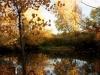 trees_fall_2012_3