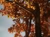 trees_fall_2012_5