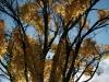 trees_fall_2012_6