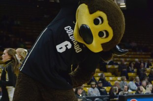 Chip, CU's mascot, distracts the other team by stretching during warmups at the USC vs. Colorado game at the Coors Events Center on Jan. 31, 2016. (Brianna Bradley/CU Independent)