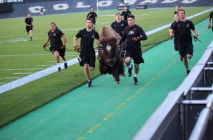From left to right the front row of runners Deyja Enriquez, Emerson McKee, Gordon Ferris, Jacob Torres and Ryan Begin run with Ralphie during a practice on Nov. 2, 2016 at Folsom Field. (Anna Blanco/CU Independent)