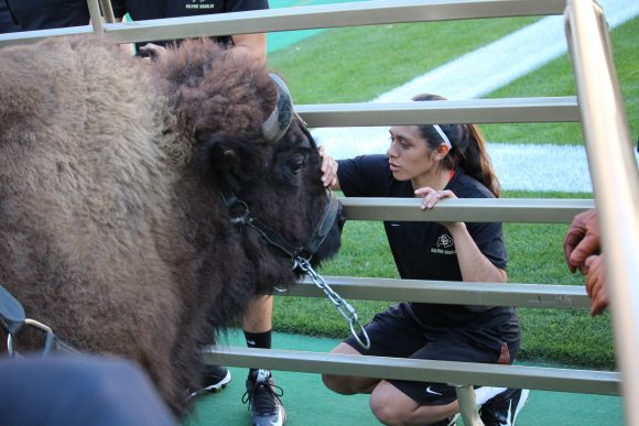 Deyja Enriquez pets Ralphie through his cage on Nov. 2nd at Folsom Field. (Anna Blanco/CU Independent)
