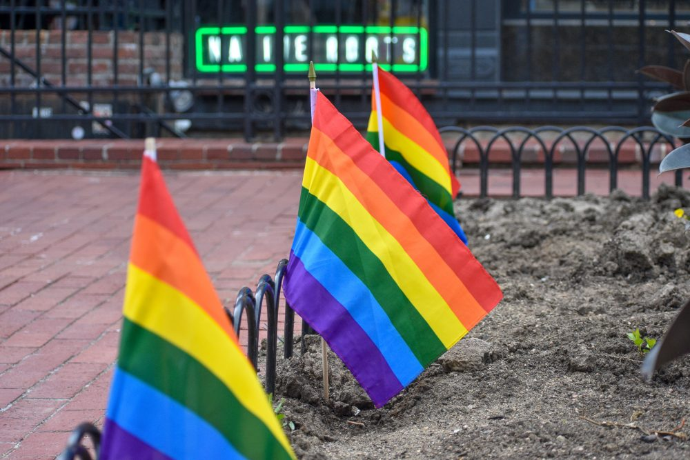 Pride flags placed in a garden on Pearl Street.